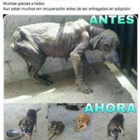 Esperanza Canina ayuda a perros maltratados y de la calle. Foto:Facebook