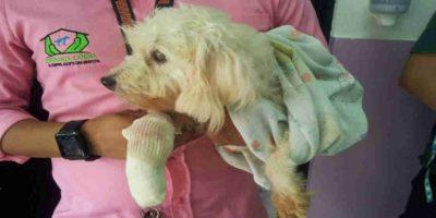 Son cientos de perros y gatos que han sido ayudados por esta asosiación. Foto:Facebook