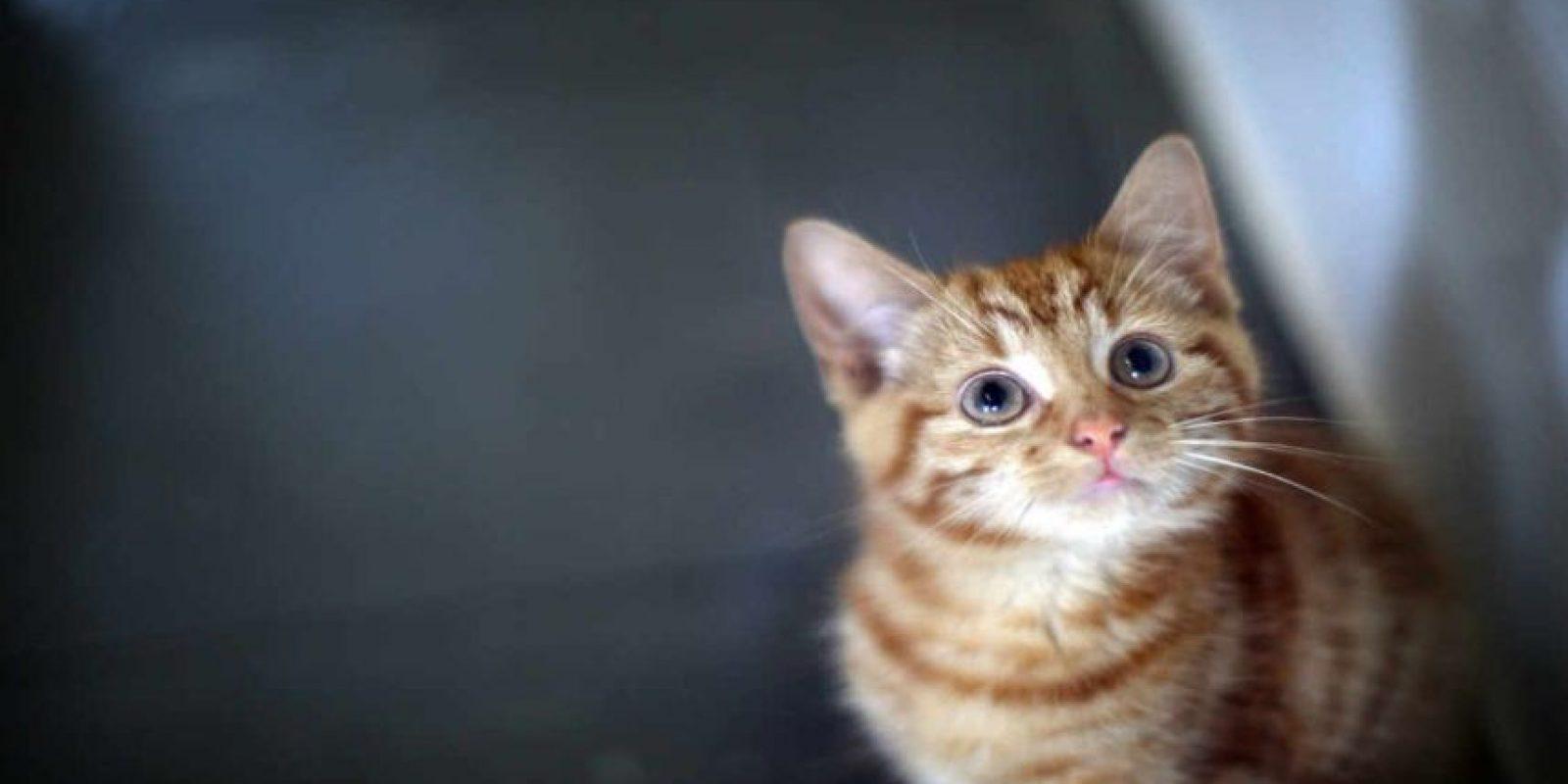 Las imágenes y videos de gatos son de las cosas más compartidas en Internet. Foto:Getty Images