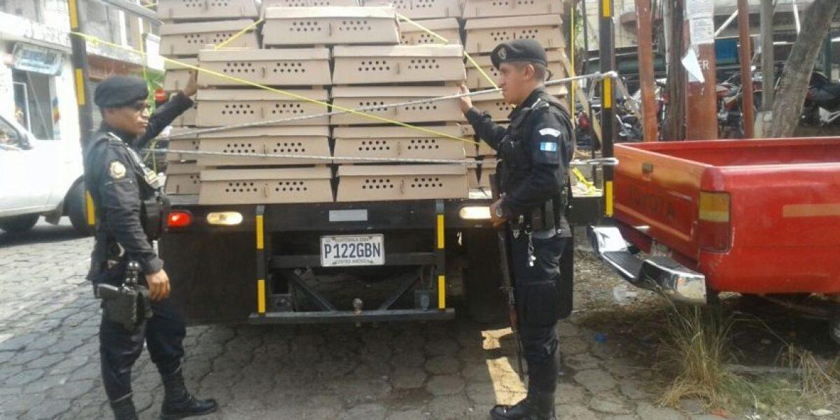 Detenido por transportar casi 13 mil pollitos sin un permiso