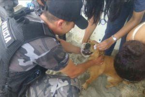 Los animales también forman parte de la lista de prioridades. Foto:facebook.com/policia.ecuador