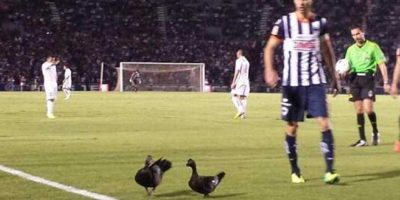 El capitán de Rayados, José María Basanta, fue quien sacó a las aves del lugar. Foto:Vía twitter.com