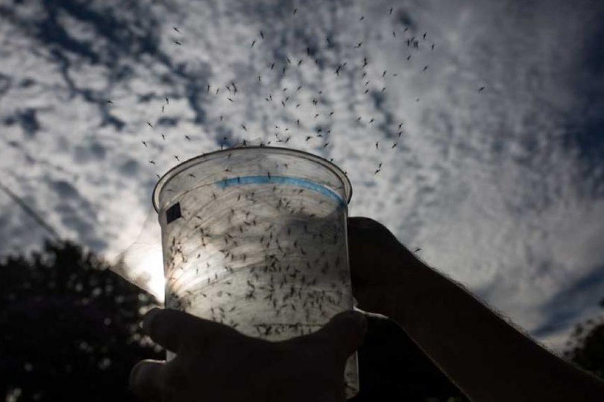 5. Amenaza por zika, dengue y chikungunya Foto:Getty Images