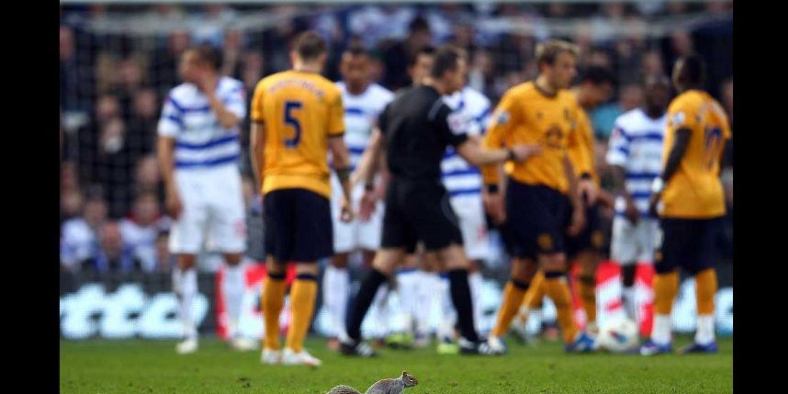 """5. En 2012, esta ardilla fue la """"espontánea"""" durante un QPR vs. Everton de la Premier League. Foto:Getty Images"""