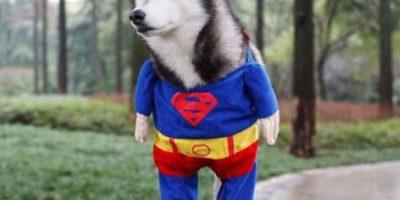Super-perro Foto:Imgur