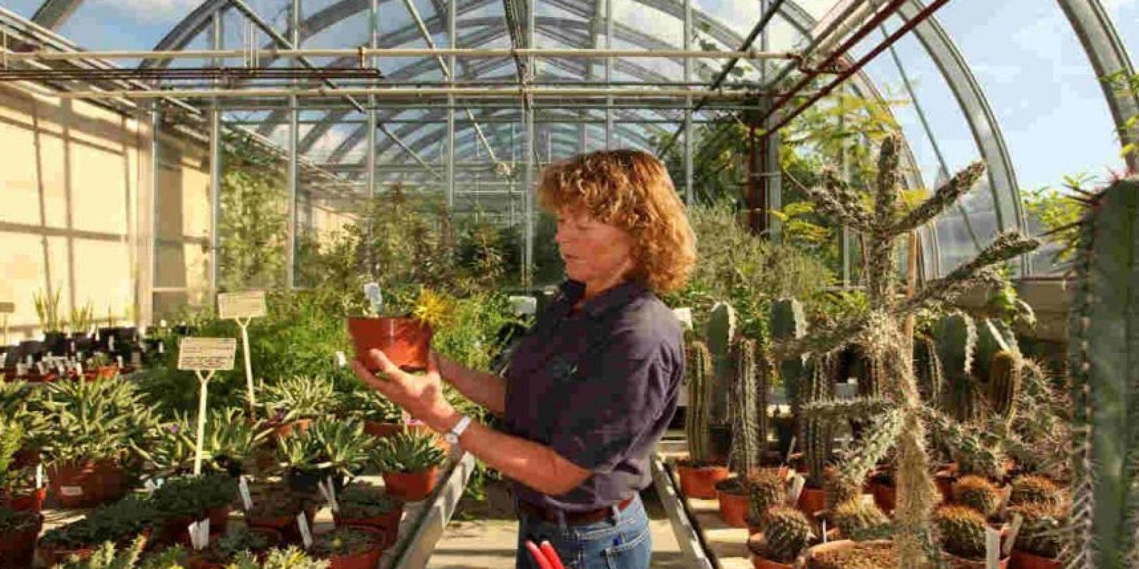 Y no olvidemos que es la fotosíntesis de las plantas la que genera el oxígeno que respiramos. Foto:Getty Images