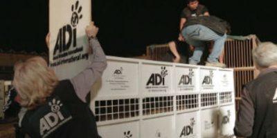 Todos fueron colocados en estas jaulas para llevarlos a Sudáfrica. Foto:facebook.com/AnimalDefenders