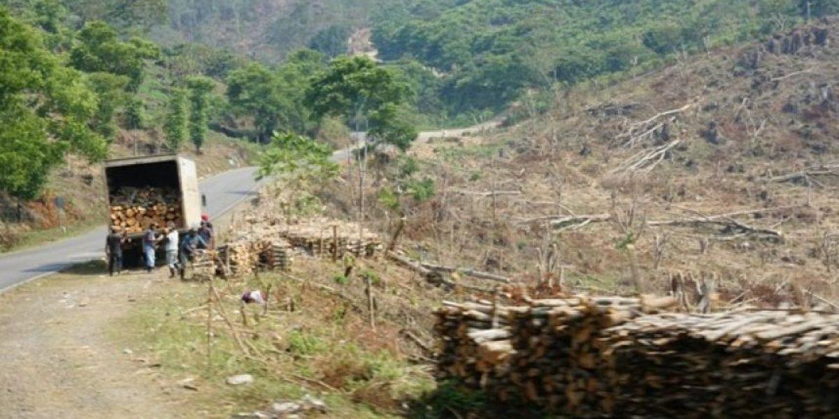 Denuncian a dos empresas por talar en la Sierra de las Minas