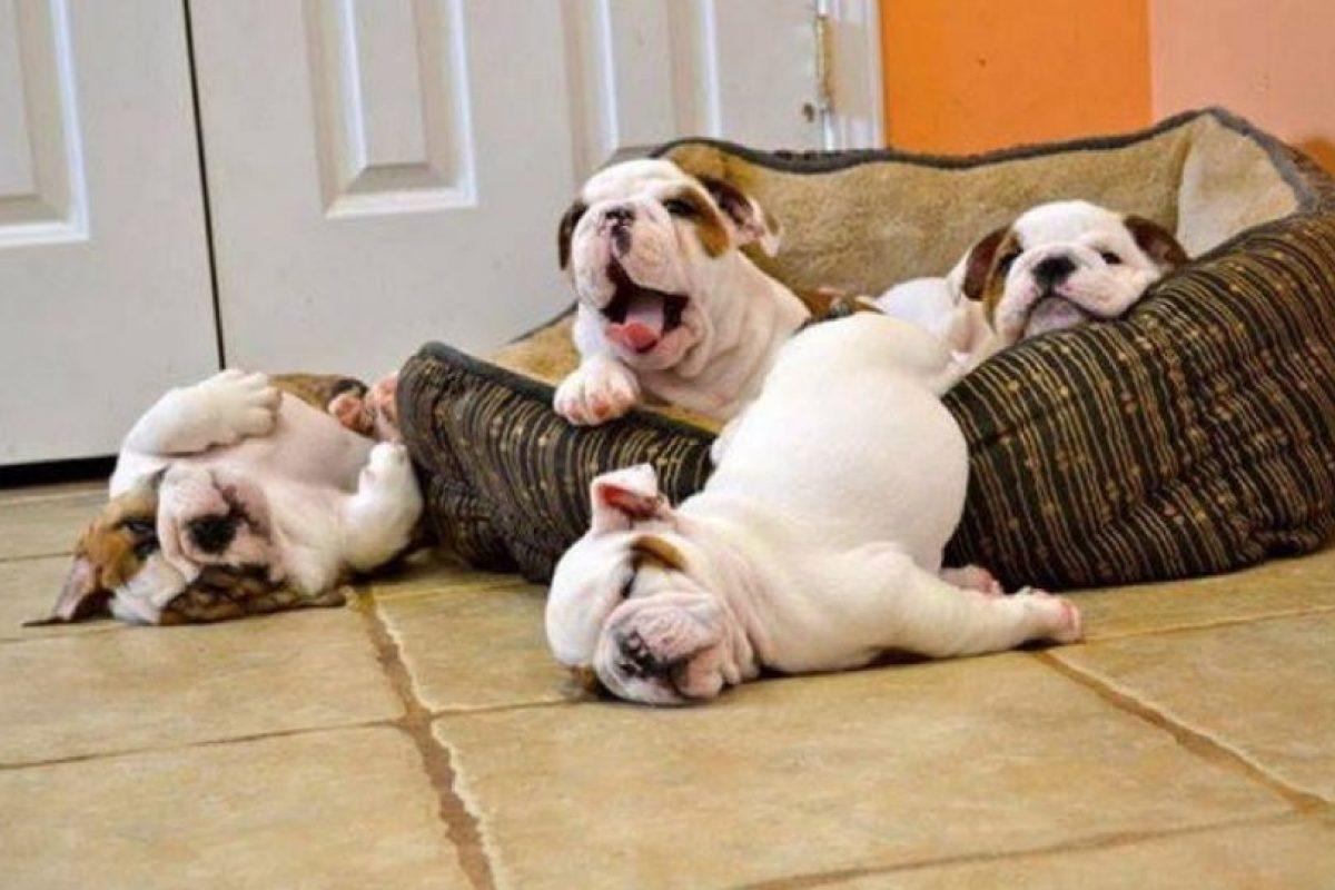 Un pequeño descanso. Foto:Vía Facebook.com/BoredomTherapy