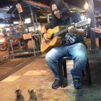 Los felinos estuvieron atentos durante toda la canción Foto:Facebook.com/JasniMohammad