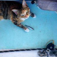 La gatita se adaptado al estilo de vida de su dueña. Foto:Instagram.com/captainlizclark/