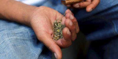 Canadá planea introducir una legislación federal de marihuana el próximo año. Foto:Getty Images