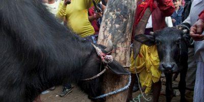 2. Festival Gadhimai Foto:vía AFP