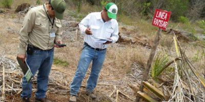 Cancelan plantaciones de palma africana en área protegida