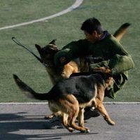 Perros de salvamento (derrumbes de edificios, socorristas) Foto:Getty Images