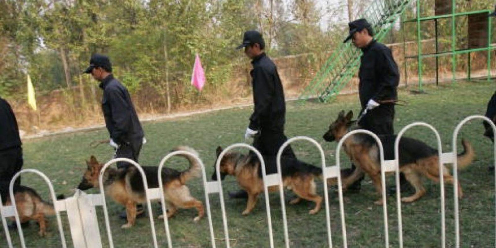 Perros de intervención (protección, antidisturbios) Foto:Getty Images