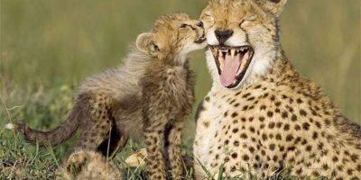 GALERÍA. El día de la madre... ¡en el reino animal!