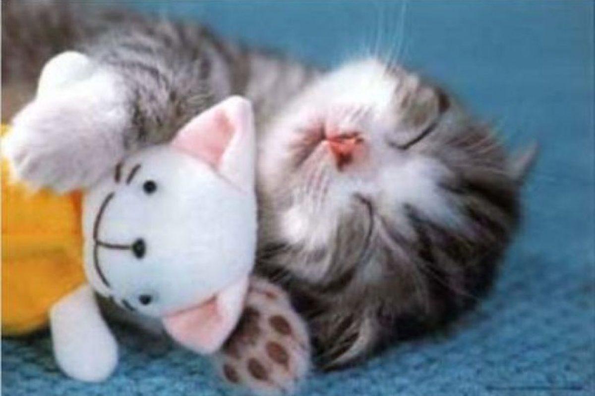 Sin importar su raza los gatos domésticos pertenece a la especie Felis Catus. Foto:Vía Pinterest