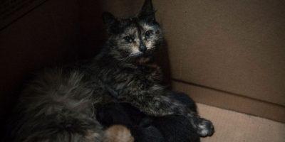 VIDEO. Hope: El enternecedor rescate de una gata y sus crías