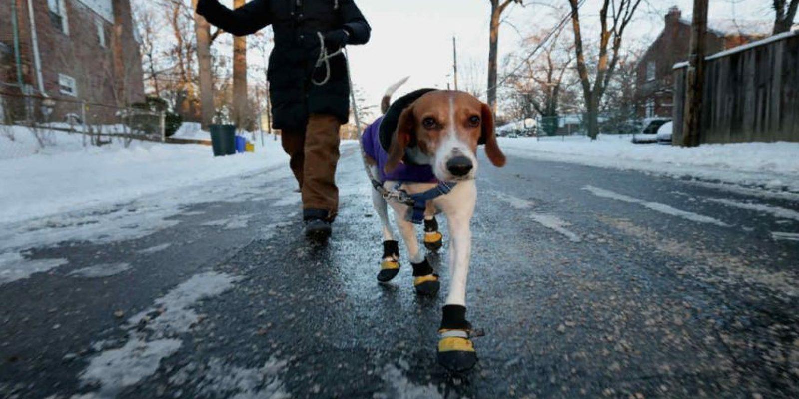 Y los sacan a pasear cuando ustedes no tienen el tiempo. Foto:Getty Images
