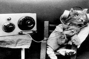 Son capaces de reproducir 100 sonidos diferentes mientras que los perros sólo 10. Foto:Getty Images