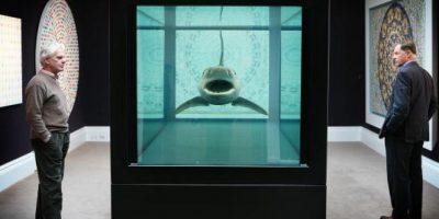 Dron capta a tiburón intentando huir de cuatro feroces ballenas