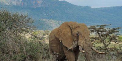 La ley en el Sudeste Asiático no es clara con zoológicos ni con manejo de animales salvajes. Foto:vía Getty Images