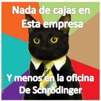 El gato de negocios. Foto:Tumblr