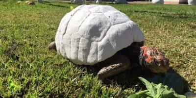 El primer caparazón impreso en 3D salvó la vida de esta tortuga