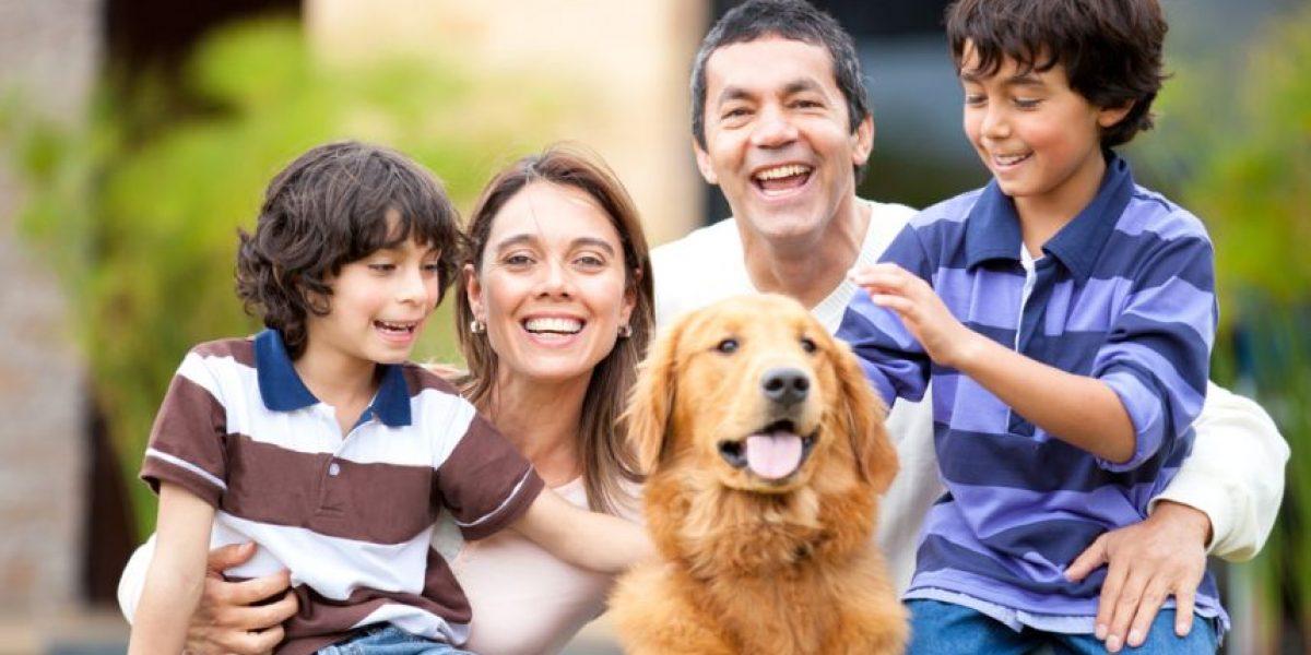 3 razones por las que debes tener una mascota