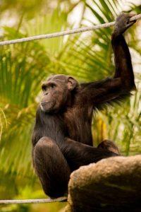 Foto:Zoo La Aurora