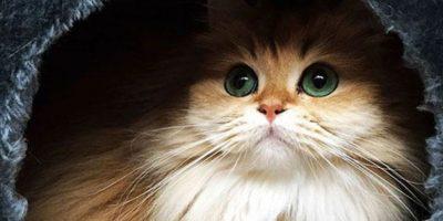 Conoce a Smoothie, la gata más linda del mundo