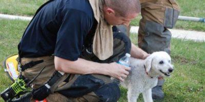"1. Cachorro ""sonríe"" al ser rescatado de incendio Foto:Facebook.com/ProvidenceVFC29/?fref=photo"