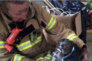5. Salvaron la vida de un cachorro tras incendio en Australia Foto:facebook.com/Melbourne.MFB