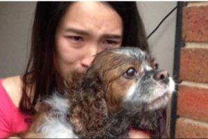 Cuando controlaron el fuego, pudieron darle oxígeno a la mascota. Sucedió en Melbourne. Foto:facebook.com/Melbourne.MFB