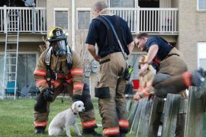 Las fotos fueron compartidas por bomberos de Baltimore, Estados Unidos. Foto:Facebook.com/ProvidenceVFC29/?fref=photo