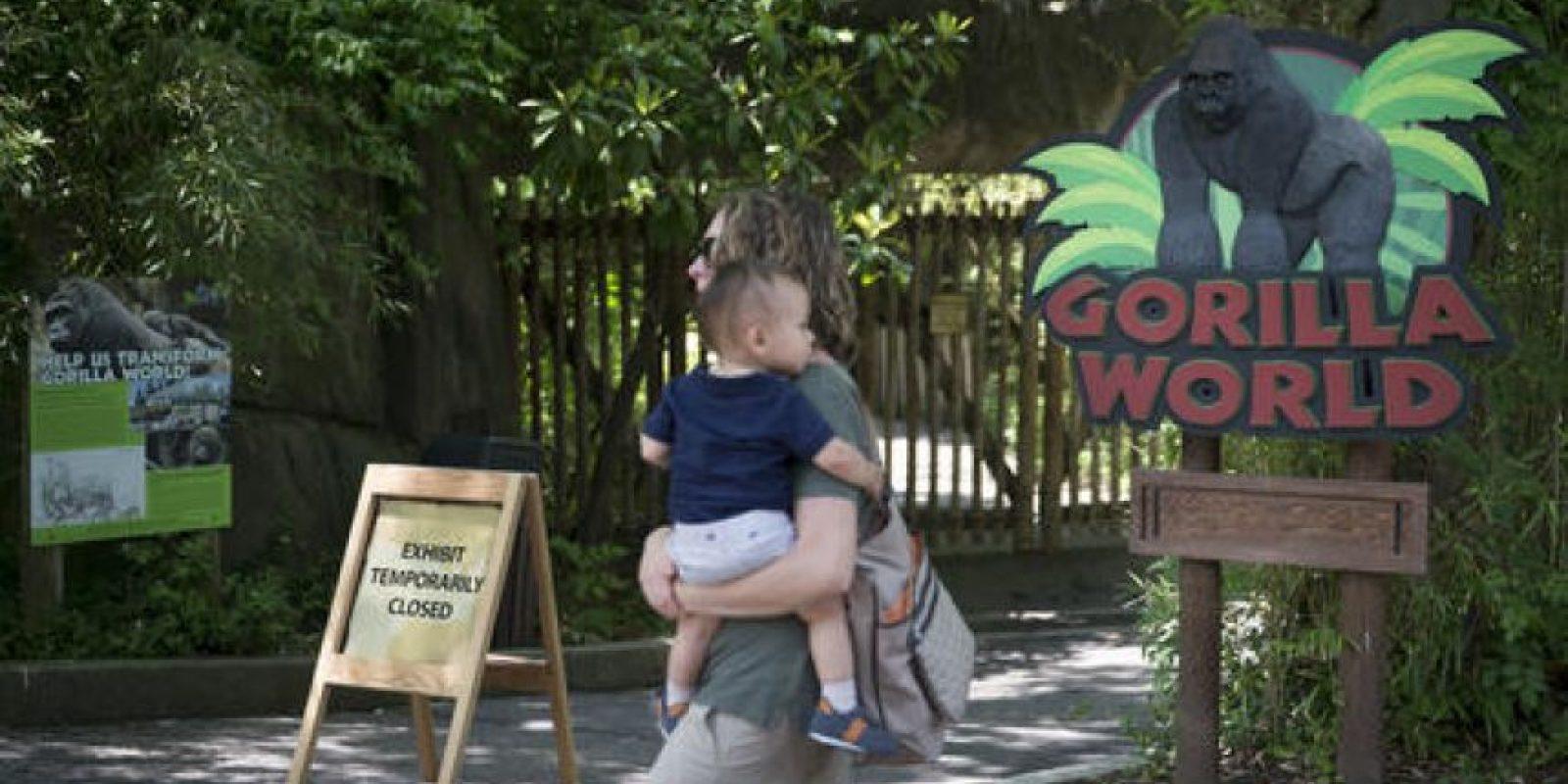 """""""Fue la decisión correcta"""", comentó el director del zoológico. Foto:AP"""