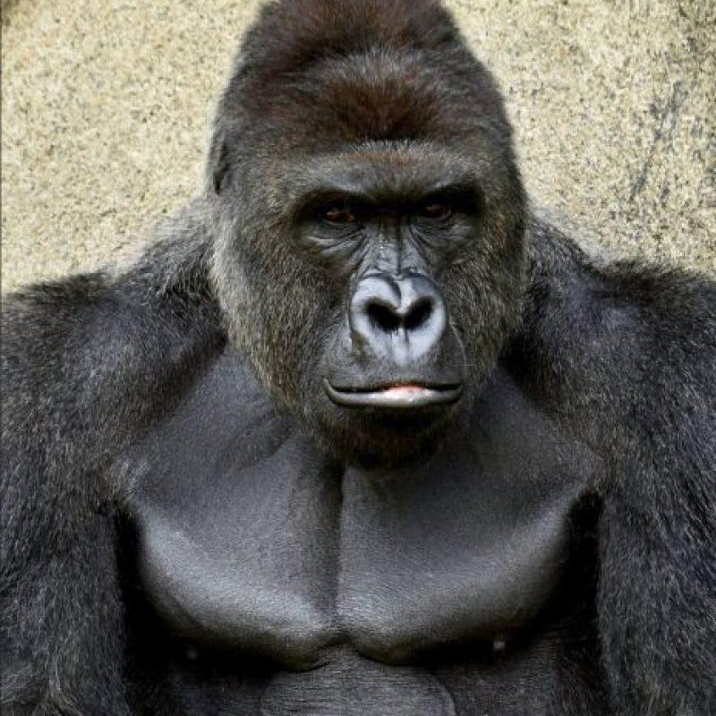 Aunque gente alrededor del mundo ha criticado la decisión, el zoológico asegura fue lo mejor. Foto:facebook.com/cincinnatizoo