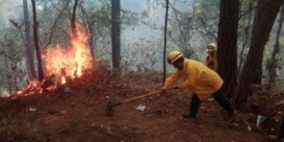 Guatemala pierde 12 mil hectáreas de bosque por incendios