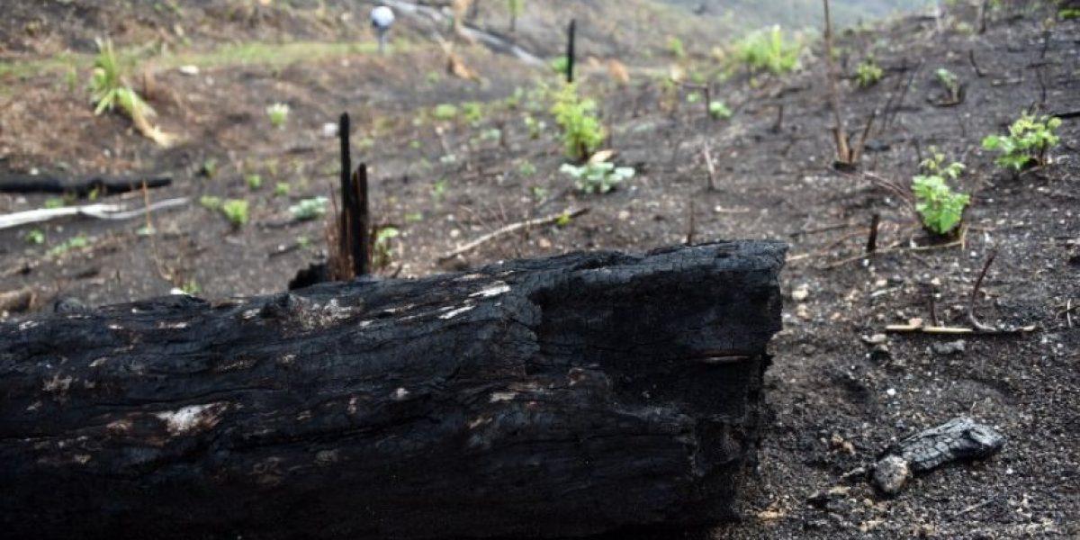 Revelan primeras imágenes de las consecuencias de los incendios en Petén