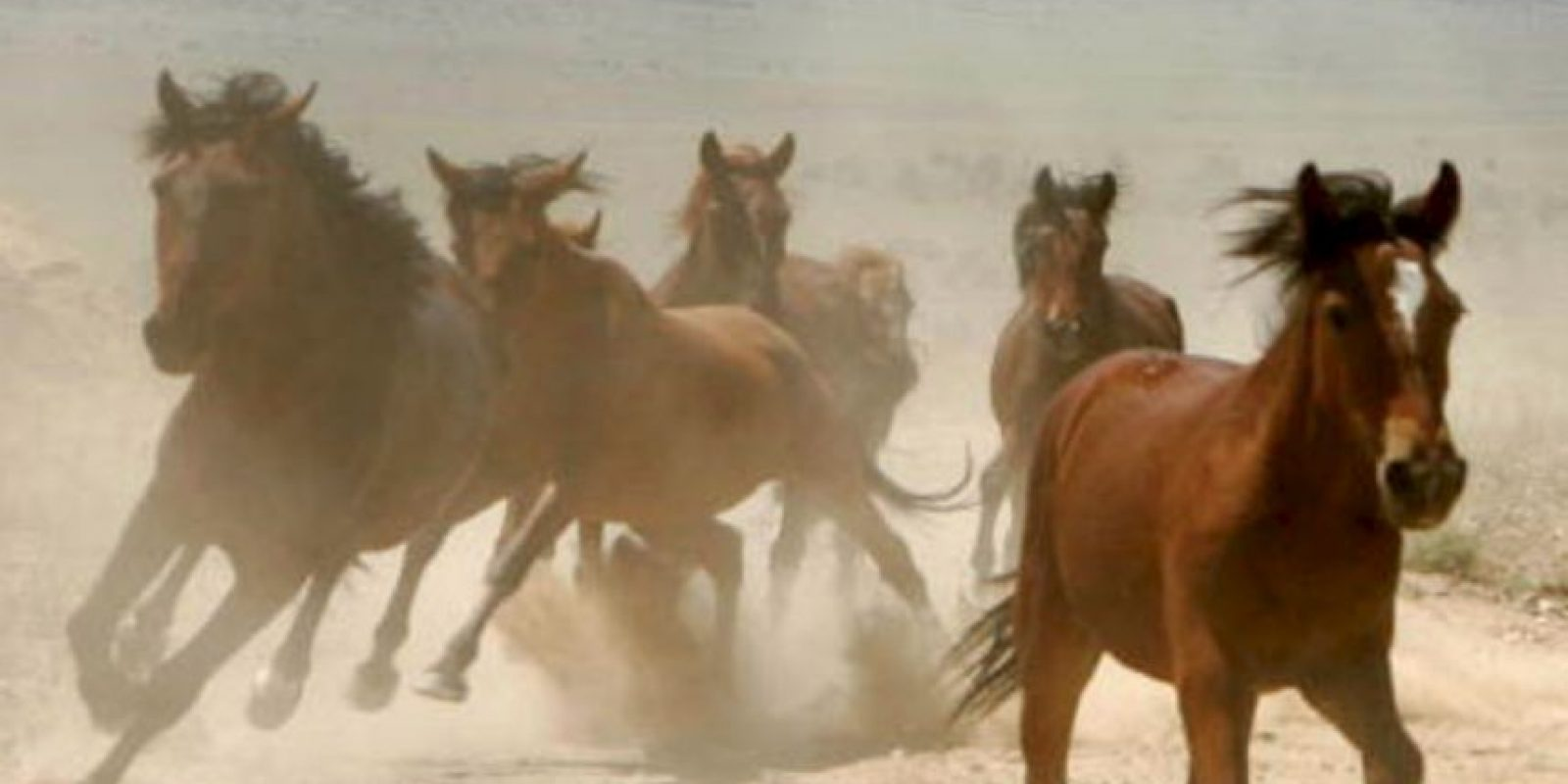 Compró el caballo más caro de su época. Otro se le murió y lo enterró con una silla de montar incrustada con diamantes. Foto:vía Getty Images