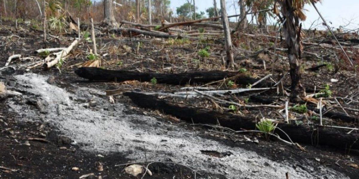 Tras incendios en Petén, presidente Morales anuncia plan de reforestación