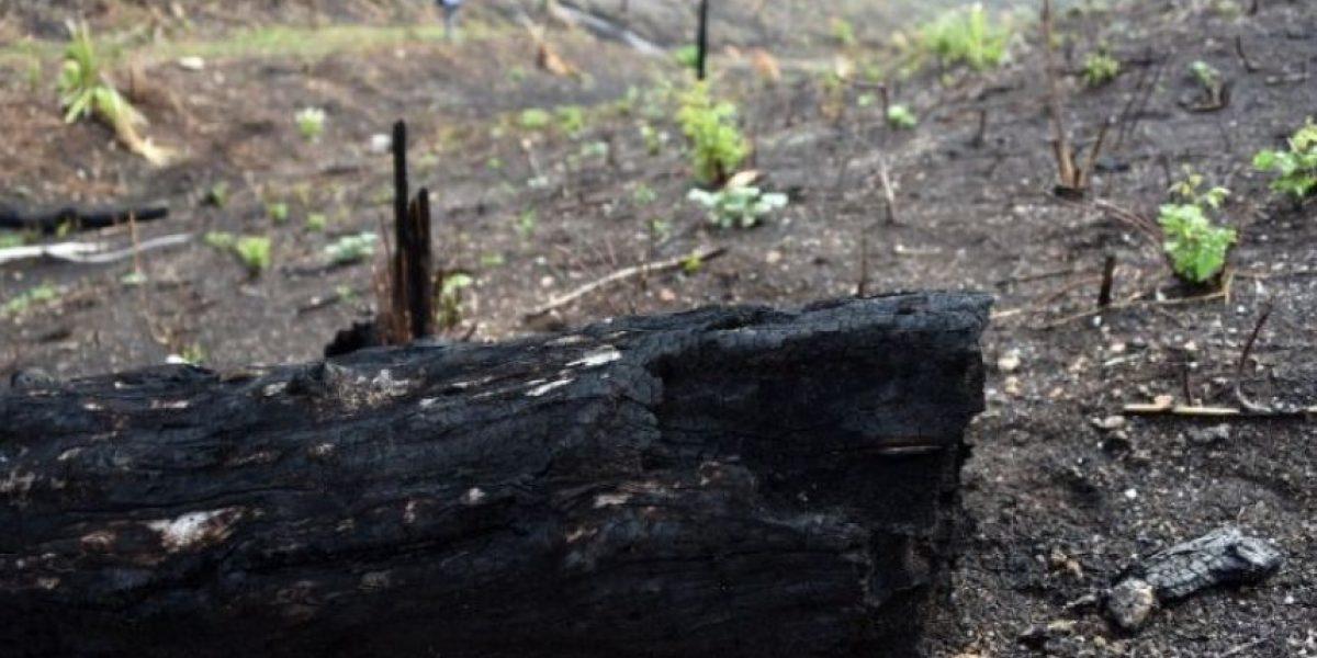 Incendios forestales en Petén fueron provacados, asegura ministro