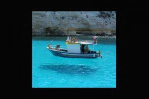 ¿Está flotando en el aire o en el agua? Foto:Tumblr