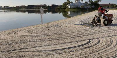Cocodrilo ataca a niño de 2 años en lago de Disney, en Florida