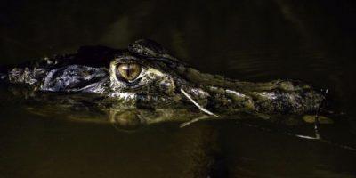 Descartan encontrar con vida a niño atrapado por caimán en Disney, Orlando