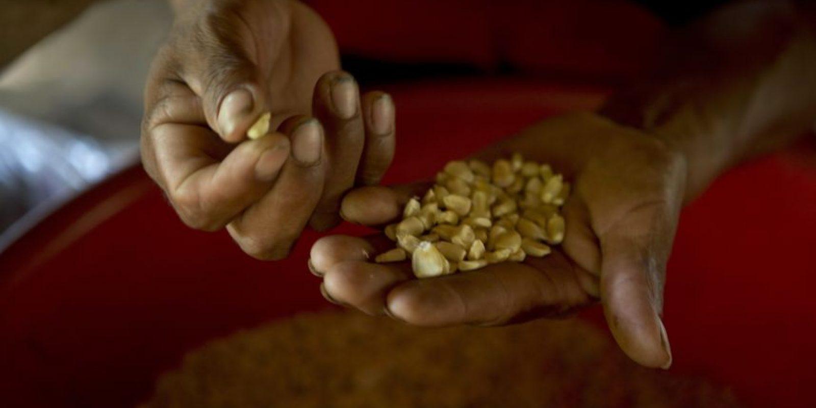 En esta fotografía del 30 de mayo de 2016, Mario Roque selecciona semillas de maíz para plantar en su casa en San Juan Ermita, en el estado oriental Chiquimula en Guatemala. Históricamente afectados por la pobreza, miles de habitantes del este de Guatemala padecen una prolongada sequía que ha derivado en una crisis alimentaria. Foto:Moises Castillo/ AP