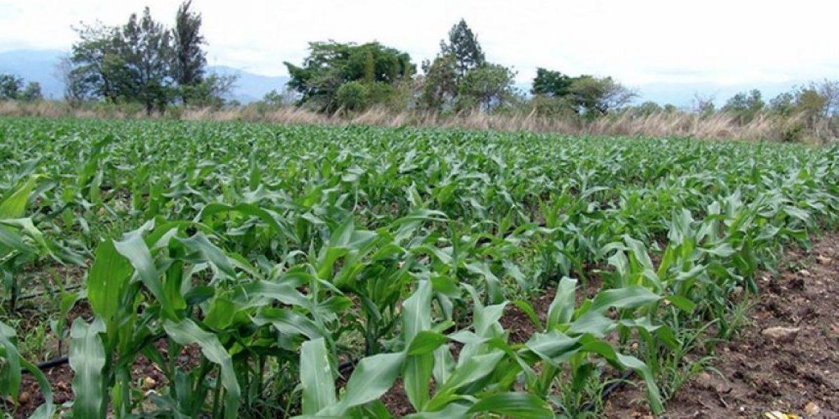 """""""No hay daños en cultivos"""", según el reporte del MAGA"""