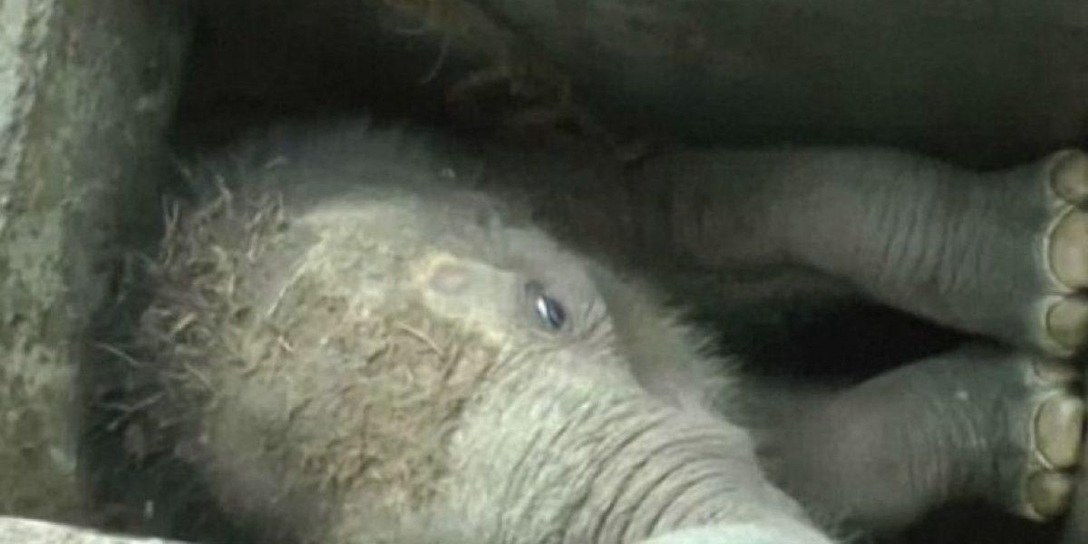 Elefante rescatado de un pozo muere por falta de veterinario