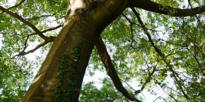 Este sábado esperan plantar medio millón de árboles en Guatemala, ¿te apuntas?